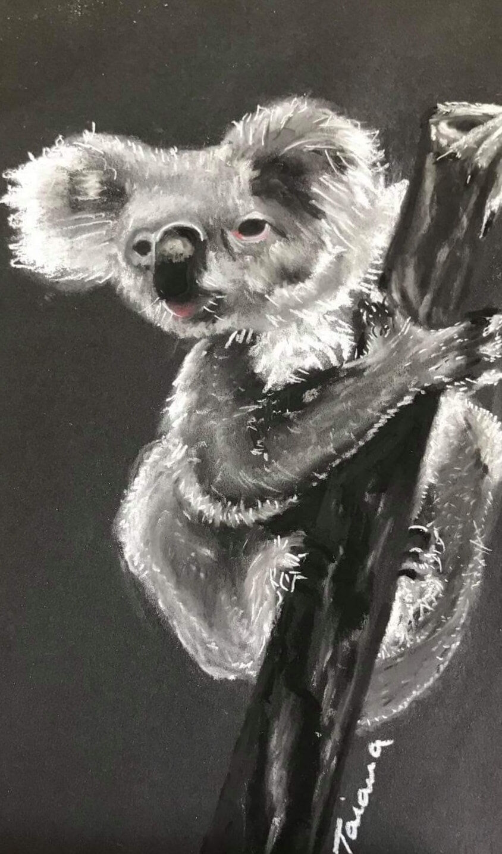 Koala -charcoal pencil on paper- 2021- Di Nicholson-21cmx32cm