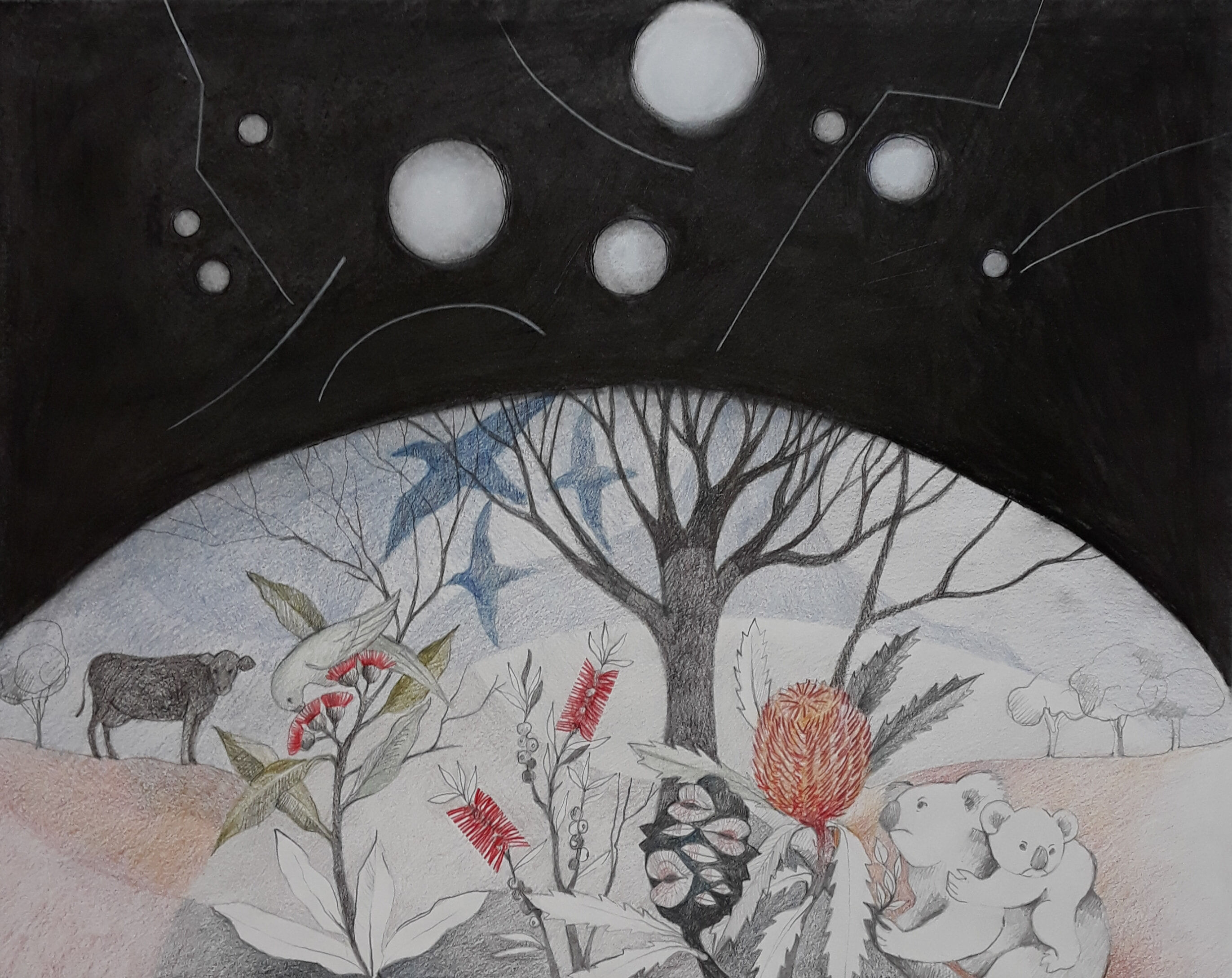 OUR WORLD - OTHER WORLDS - Unframed - Compressed charcoal and pencil - 56 x 45 cms - $400